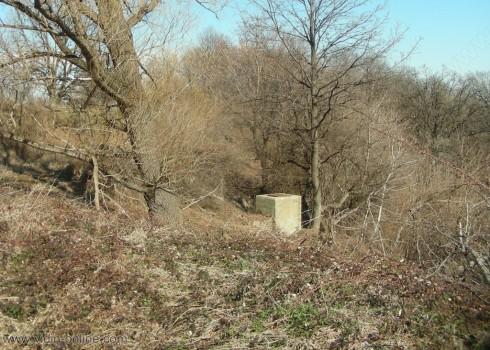 Гъсеници заплашват екологичното равновесие във Виидинско