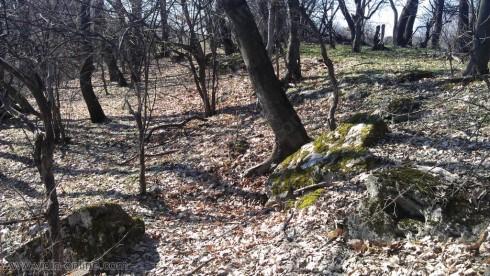 Проблемът с нападнатите от гъсеници гори в Бойница се разраства