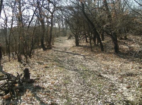 15 700 дка гори във Видинско са спасени от нападение на гъсеници, чрез своевремено третиране с препарати