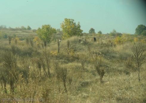 Трима жители на Арчар са задържани при незаконни разкопки в античния град Рациария