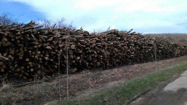 Инж. Сашко Каменов, РДГ – Берковица: Горските площи в Северозападна България не намаляват