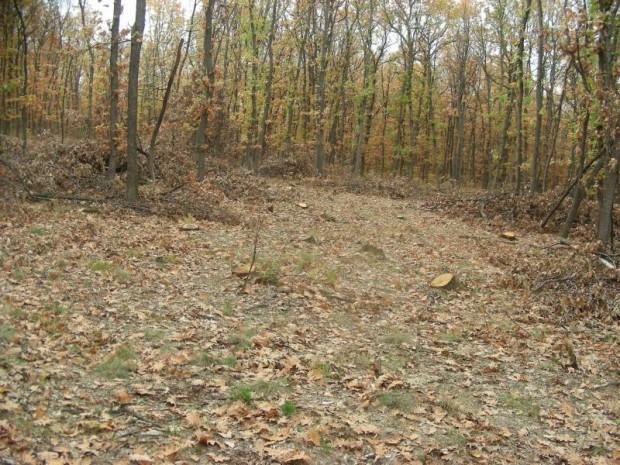Инж. Радослав Николов: Държавно горско стопанство – Видин има изготвени планове за защита на горите от пожари