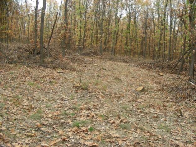 Има поражения по общинската гора на Бойница от зимното обледяване на дърветата