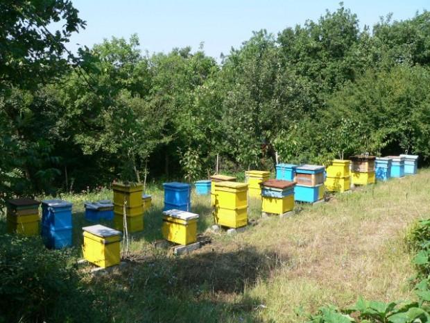 Д-р Владимир Владимиров, кмет на гр.Кула: Комисия проверява сигнал за повишена смъртност на пчели след пръскане на земеделски площи