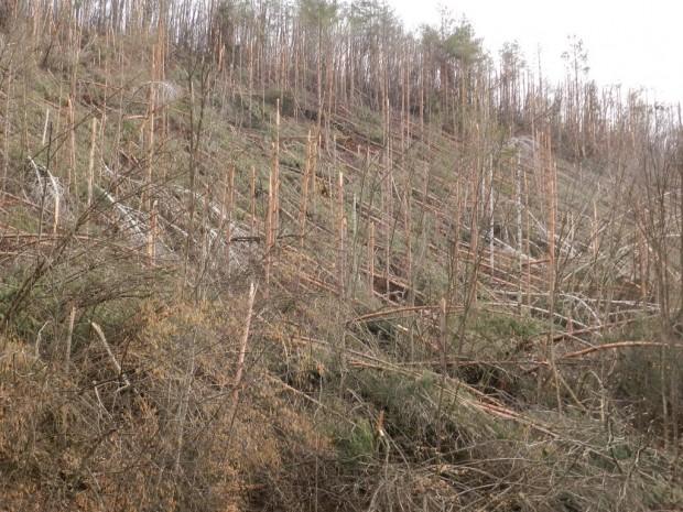 """Инж.Цветан Михайлов, директор на Горско стопанство """"Миджур"""": Сериозен проблем са частните гори и включването на собствениците им в проекти за възстановяване на горските пътища"""