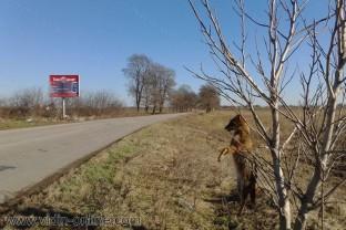 обесен чакал до село Слана бара