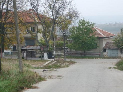 Кафяво гниене се е появило по доматите в село Воднянци вследствие на дъждовете