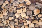 Материалите по преписка за незаконен добив на дърва за огрев са изпратени на Районната прокуратура