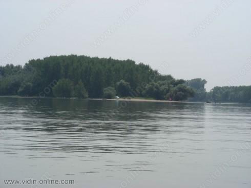 300 дка тополови култури, насадени през миналата година по дунавския бряг, са под вода