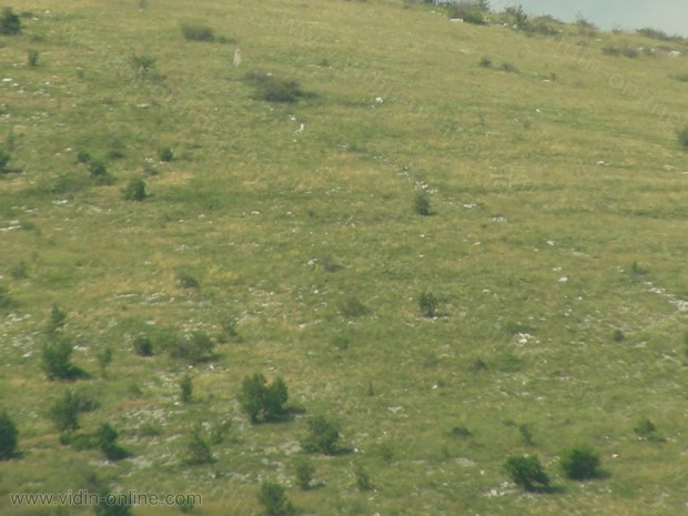 връх Коритска глама
