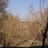 Стрелбището до Баба Вида