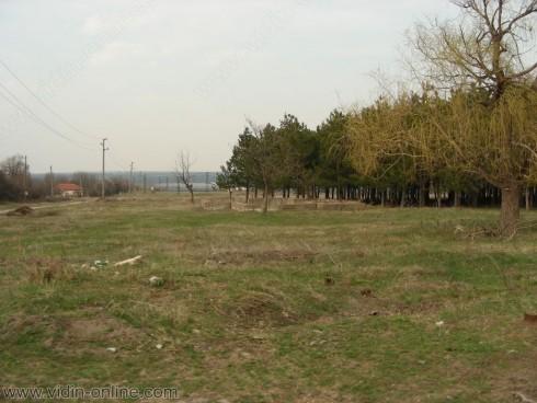 14 000 дка общински гори са унищожени в землището на община Бойница от гъсеница
