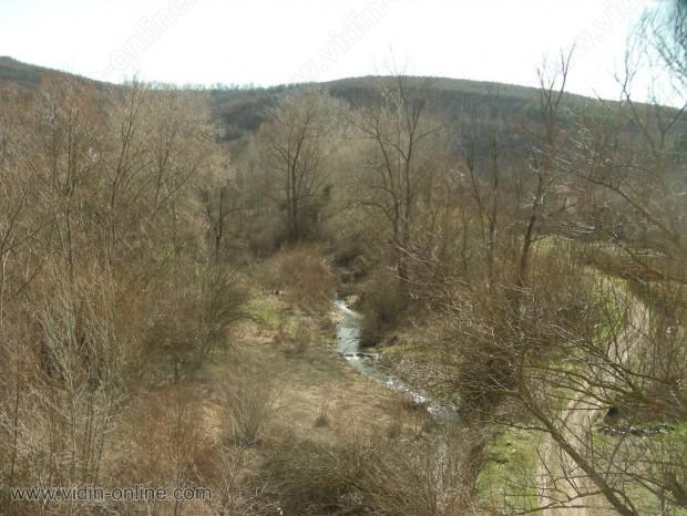 Жителите на видинското село Бранковци излязоха на протест заради незаконното изсичане на горите