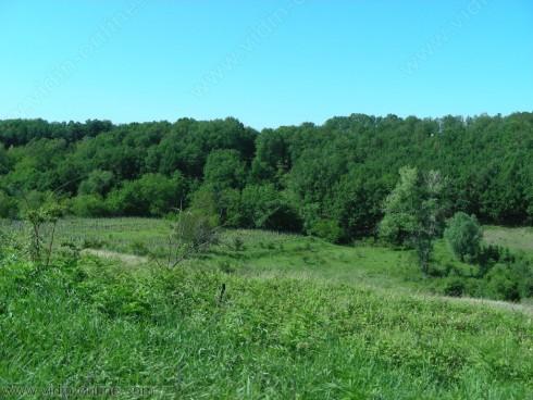 Около 90% от листната маса в горите край село Делейна е унищожена от гъсеници