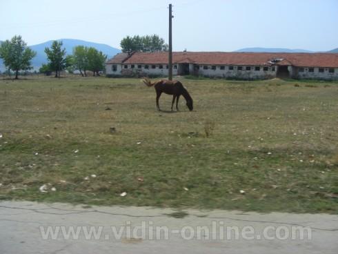 Осигуряването на пасища е най-големият проблем на животновъдите, според фермер от Видинско