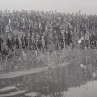 Направа на укрепления и залесяване на бреговете на река Тимок край Брегово 1935г