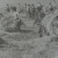 Прибиране на сено