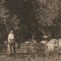 Пчелар във Видин 1930