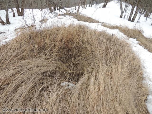 Картечно гнездо