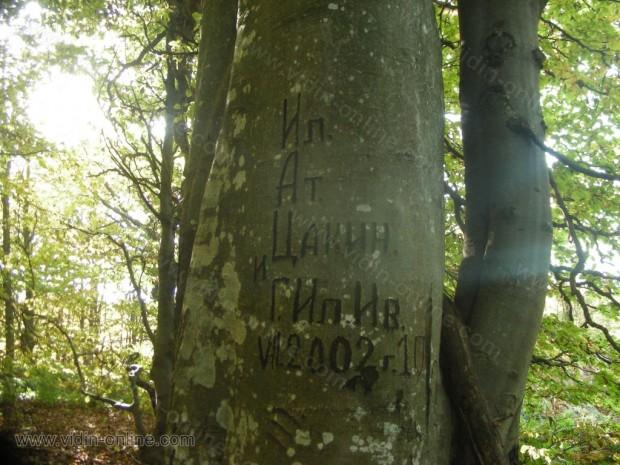 Маркирани дървета