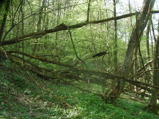 Стар горски път
