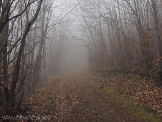 Горски път над село Салаш