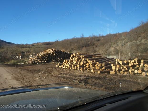 Веселка Борисова, Държавно горско стопанство – Белоградчик: Пътищата за противопожарните коли в горите са почистени