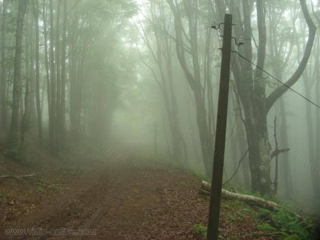 Електрически стълбове в гората