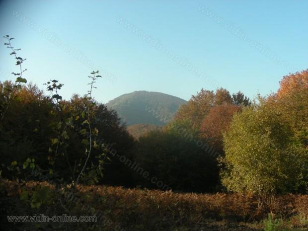 връх Зелениград
