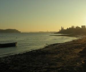 Видин - Дунав