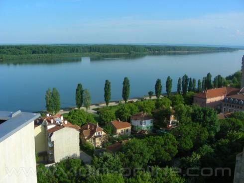 Над 1000 дка по бреговата ивица на река Дунав е залесена с тополови насаждения