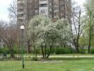 град Видин 17 април 2011г.