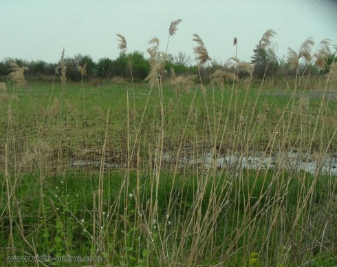 Край Белоградчик отводняват водоем, застрашаващ къщи и селскостопански постройки