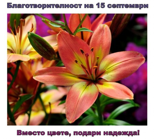 Благотворителност на 15 септември. Вместо цвете, подари надежда