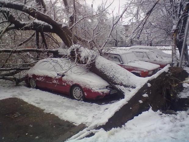 Момчил Станков, областен управител на Видин: Отстраняват се паднали дървета във Видин и паднало дърво на пътен участък Кула – Киряево