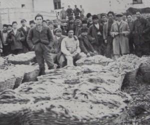 Събиране на грозде в Хаджиивановата воденица край Видин 16 октомври 1928г.