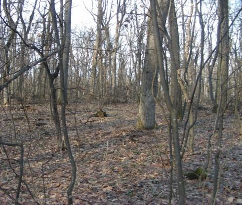 200 горско-плодни дръвчета ще засади утре Държавно горско стопанство – Видин