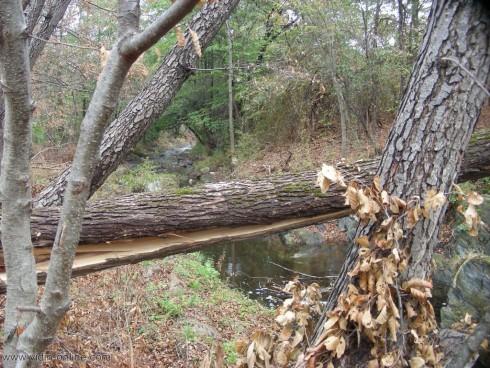 Забранен е риболовът в река Чупренска
